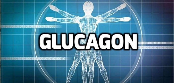 Hormones and Bodybuilding: Glucagon