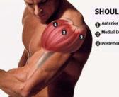 Anterior Deltoid: Functional Anatomy Guide