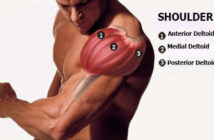 Muscle anatomy: anterior deltoid