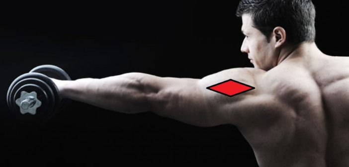 Lateral deltoid functional anatomy guide