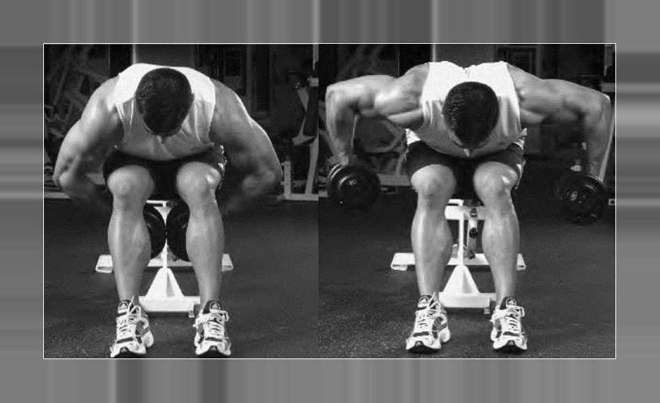 seated bentarm bentover dumbbell row � bodybuilding wizard