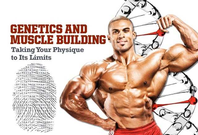 Bodybuilding and genetics