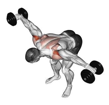 posterior deltoid functional anatomy guide � bodybuilding