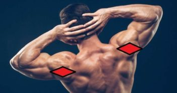 Rear deltoid muscle anatomy