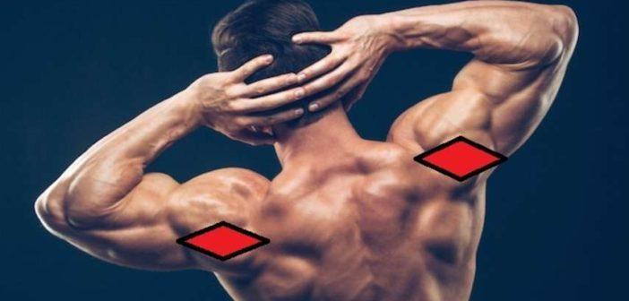 Rear deltoid muscle anatomy