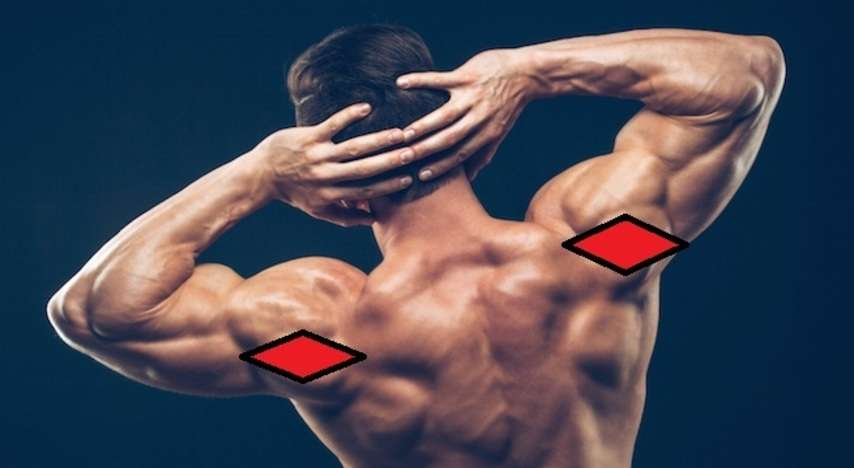 Rear shoulder anatomy