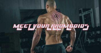 Bodybuilding anatomy: rhomboids