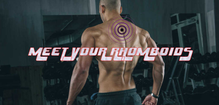 Rhomboid Muscles: Powerful Scapular Retractors