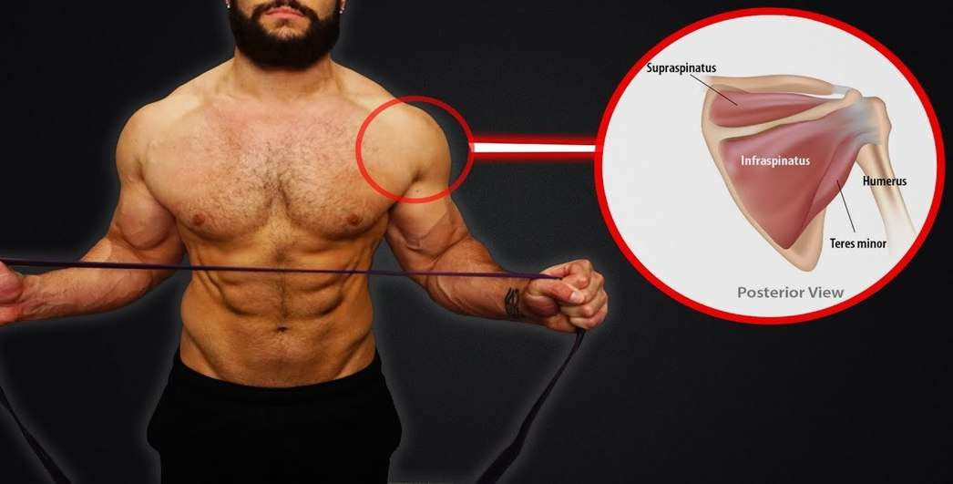 Rotator Cuff Muscles Shoulder Stabilizers Bodybuilding Wizard