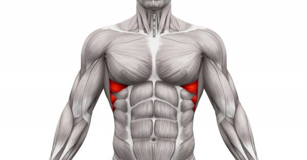 Serratus Anterior Muscle: Functional Anatomy Guide