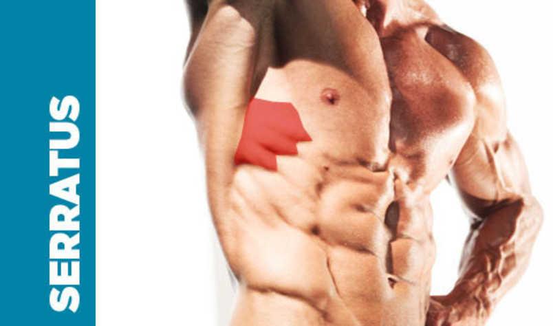 Remarkable Serratus Anterior Muscle Functional Anatomy Guide Short Links Chair Design For Home Short Linksinfo