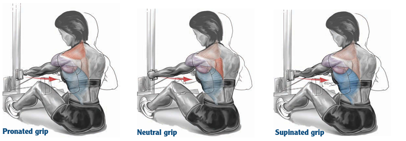 Seated cable row: pronated, neutral, and supinated grip