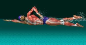 swimming for cardio
