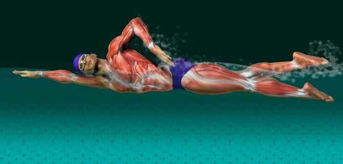 Swimming – Best Low-Impact Cardio Exercise