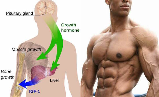 Hiit Stimulates Human Growth Hormone Production Bodybuilding Wizard