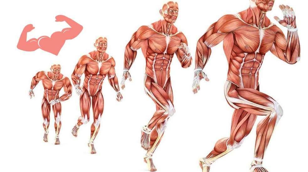 Cardiovascular training for bodybuilders