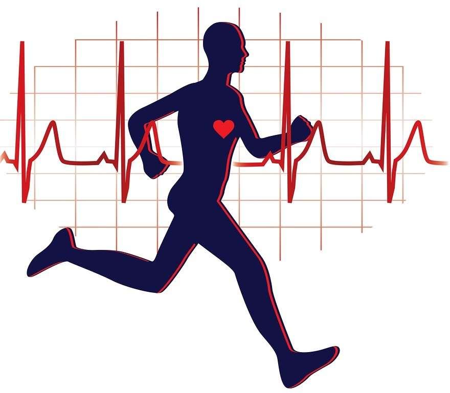 cardio training: heart rate (bpm)