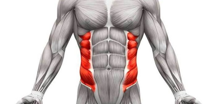 Abdominal Oblique Muscles: Functional Anatomy Guide