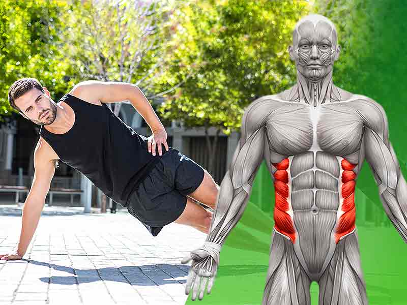 Abdominal Oblique Muscles: Functional Anatomy Guide ...