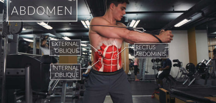 six pack abs rectus abdominis