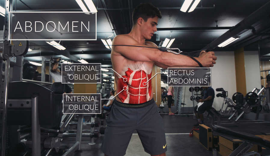 Rectus Abdominis Muscle Functional Anatomy Guide