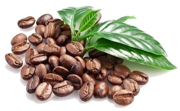 caffeine thermogenic ingredient