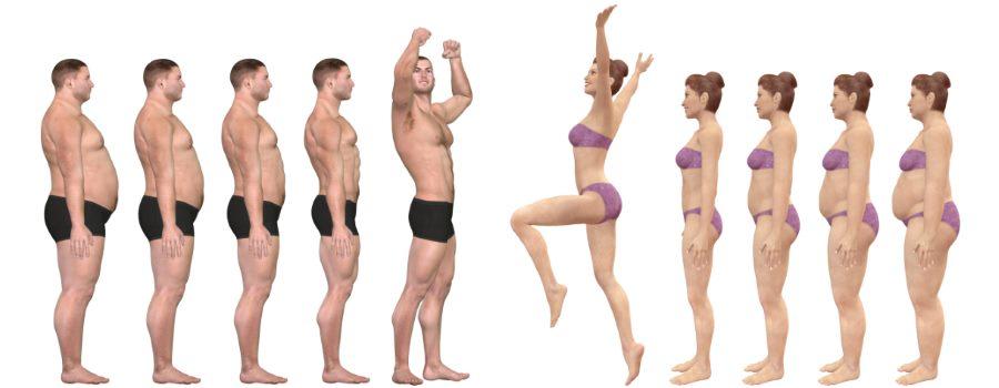 body fat percentage-men & women
