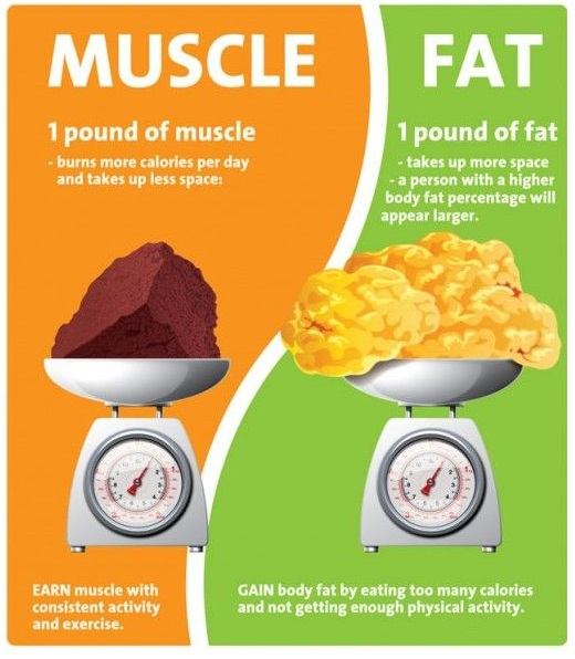 1 pound of muscle vs 1 pound of fat