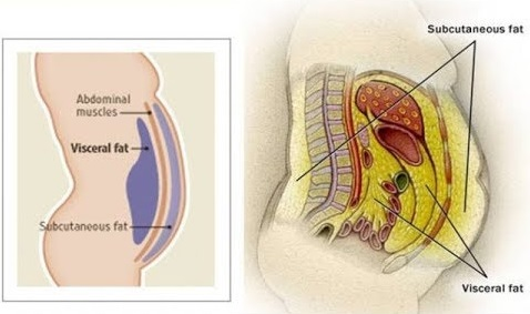 body location: subcutaneous and visceral fat