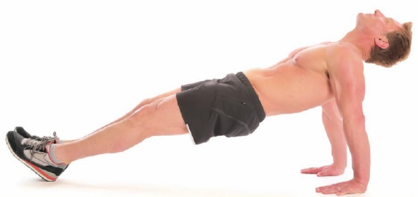 Reverse Plank: Exercise Guide & Tips • Bodybuilding Wizard