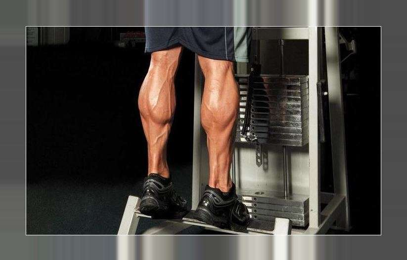 lower body muscle groups
