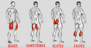 major lower body muscle groups