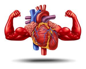 رفع الأثقال وصحة القلب