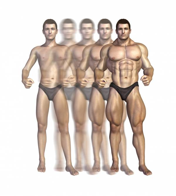 muscle hypertrophy explained
