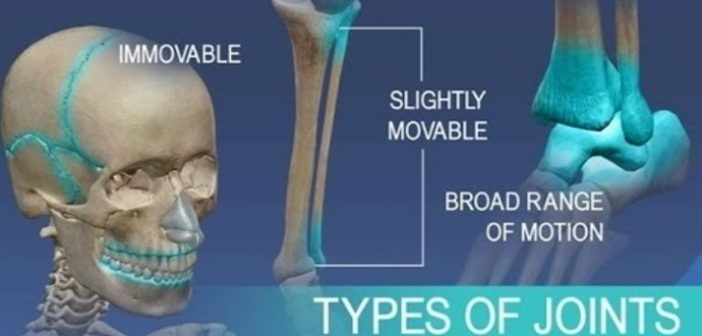 Classification of Joints in the Human Body