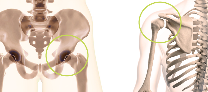 movable joints diarthrosis