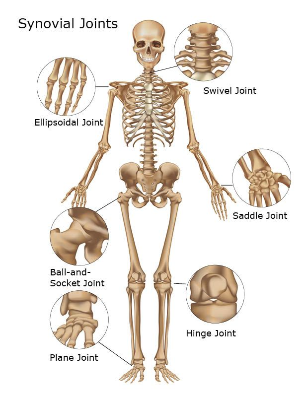 Synovial joint classifications