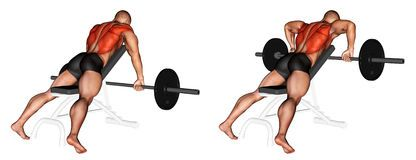 bench supported barbell rows