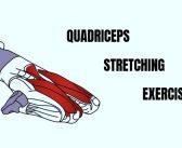 Quadriceps stretching exercises