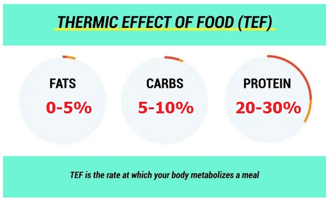 thermic effect of different foods and macronutrients