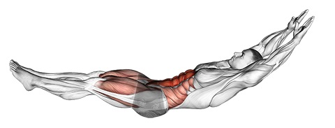 hollow body hold position muscles worked