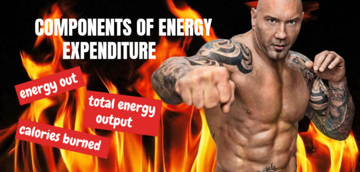 Components of energy expenditure (Energy output)