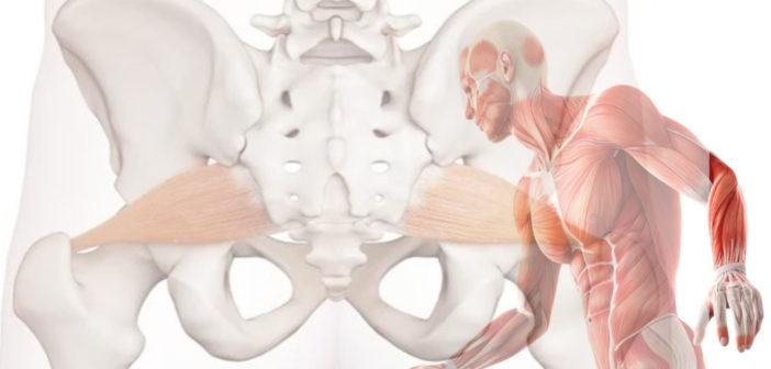 Piriformis Muscle: Functional Anatomy Guide