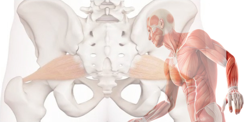 anatomy of the piriformis muscle