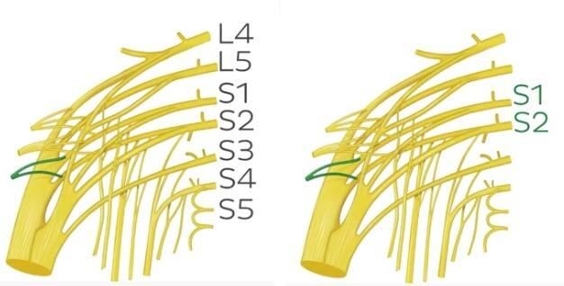 innervation piriformis muscle
