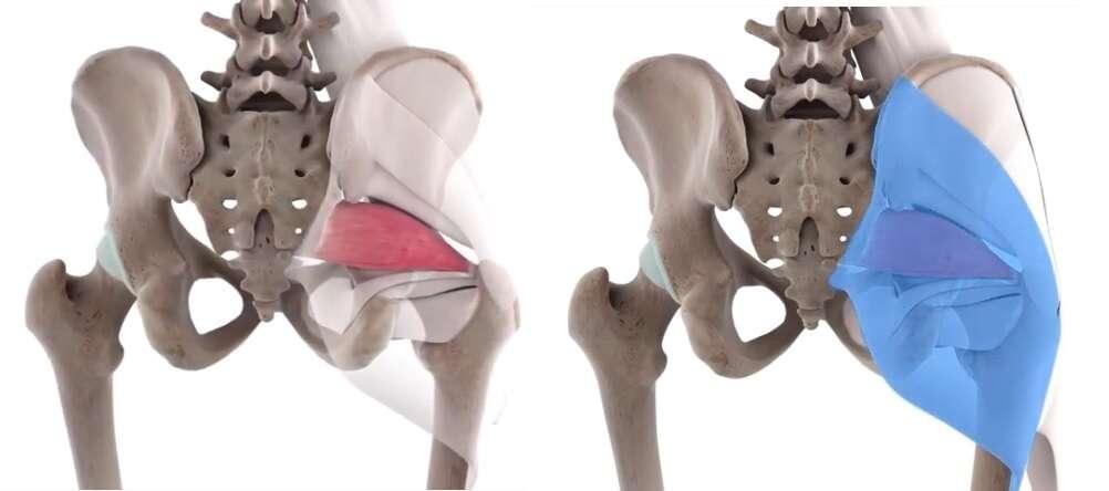 piriformis muscle functional anatomy guide