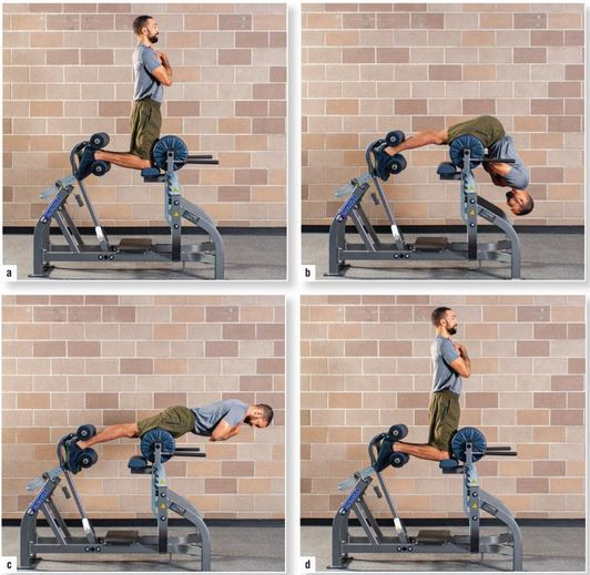 glute-ham raise exercise on a glute ham bench