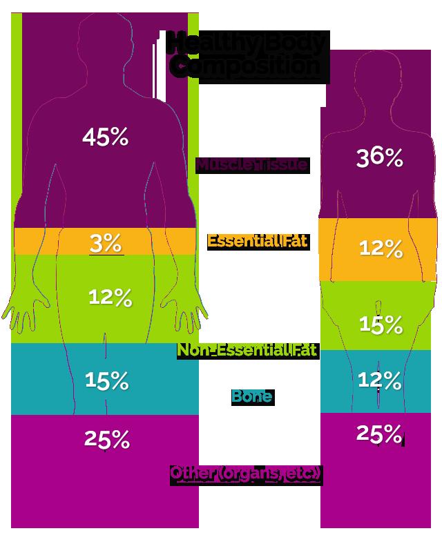 muscle mass comparison men women