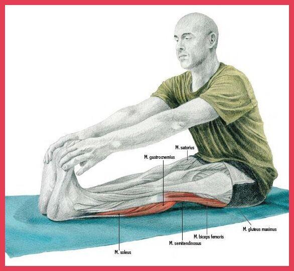 seated two leg hamstring stretch - seated forward fold
