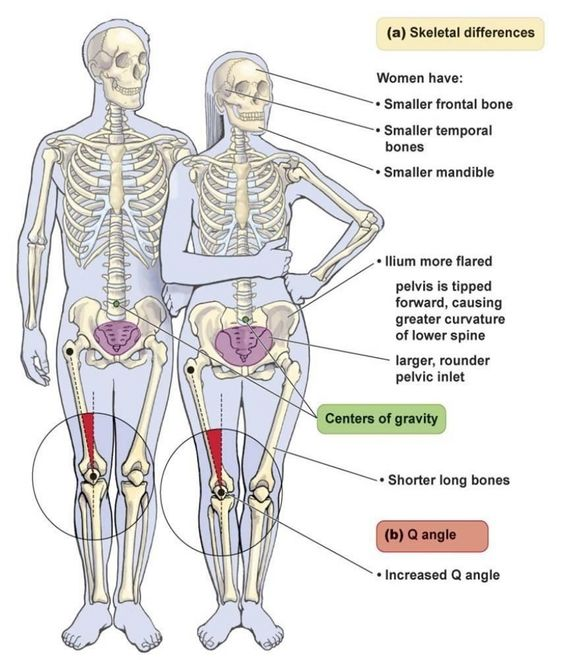 skeletal differences between male female body